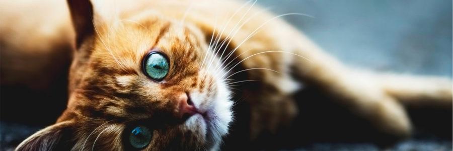 Vaccino gatto